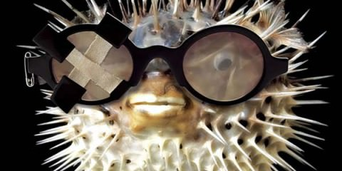 theo-eyewear